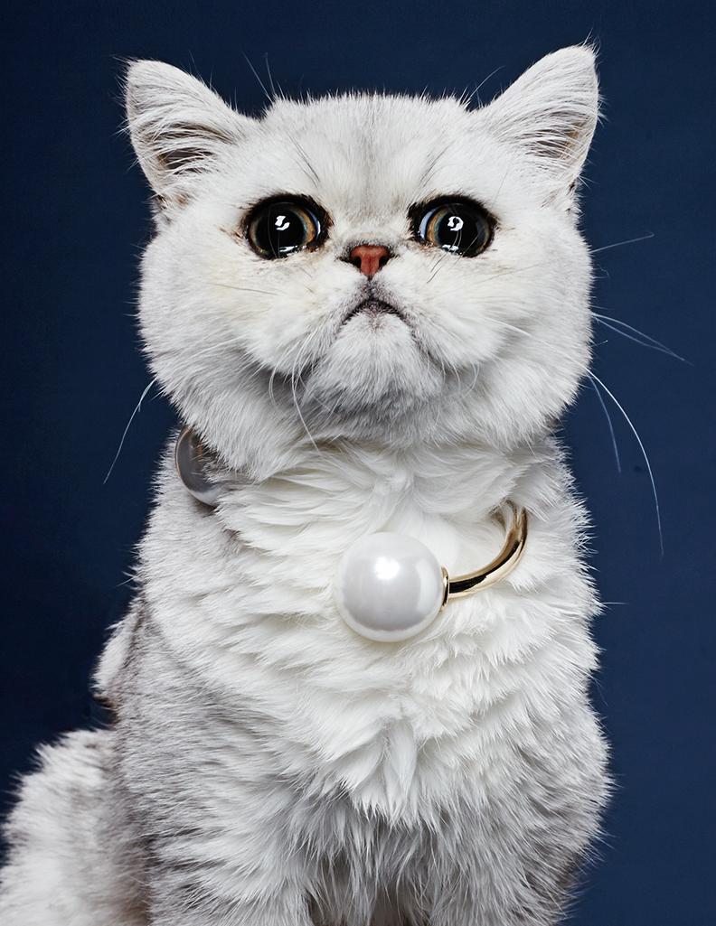 peukie-the-cat