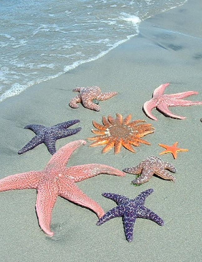 starfish-4-title