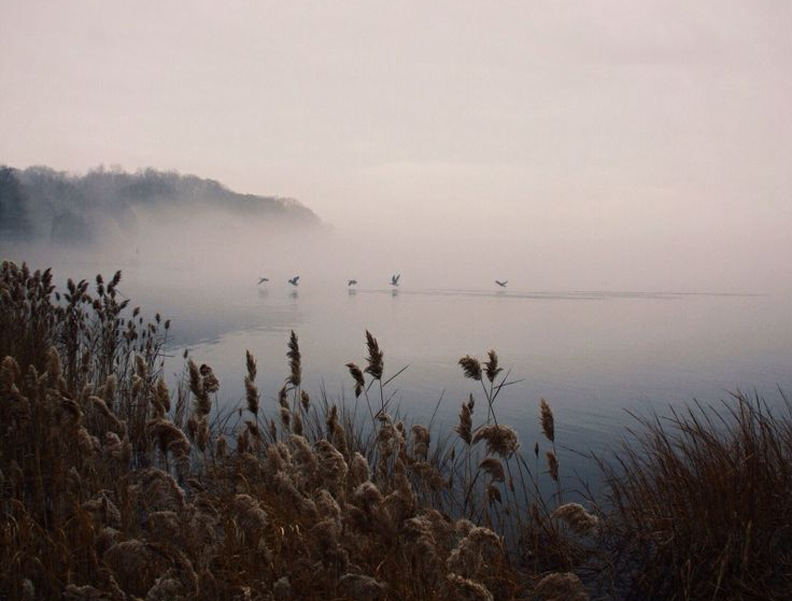 whitney-hayes-fog-over-water